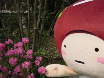 庭園の花々を眺めるあずきさん