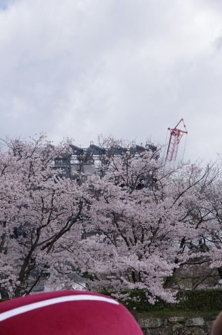 姫路城を覆い隠す桜